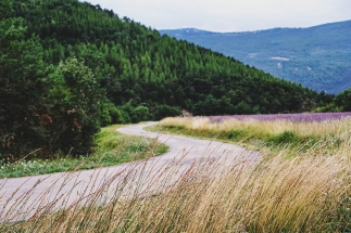 Windy roads and lavender fields